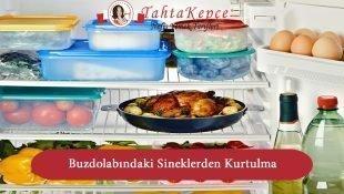 Buzdolabındaki Sineklerden Kurtulma Yolları