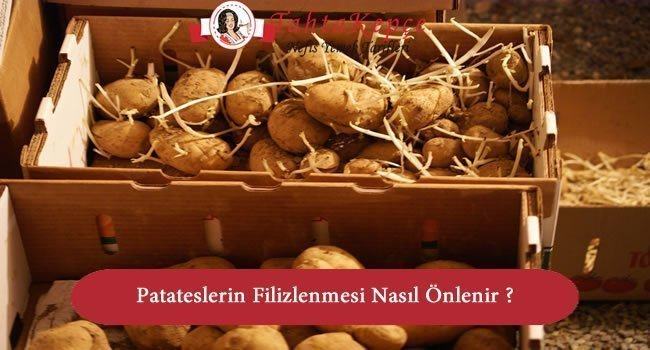 Patates Filizlenmesi Nasıl Önlenir ?