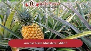 Ananas Nasıl Muhafaza Edilir ? Saklanır ?